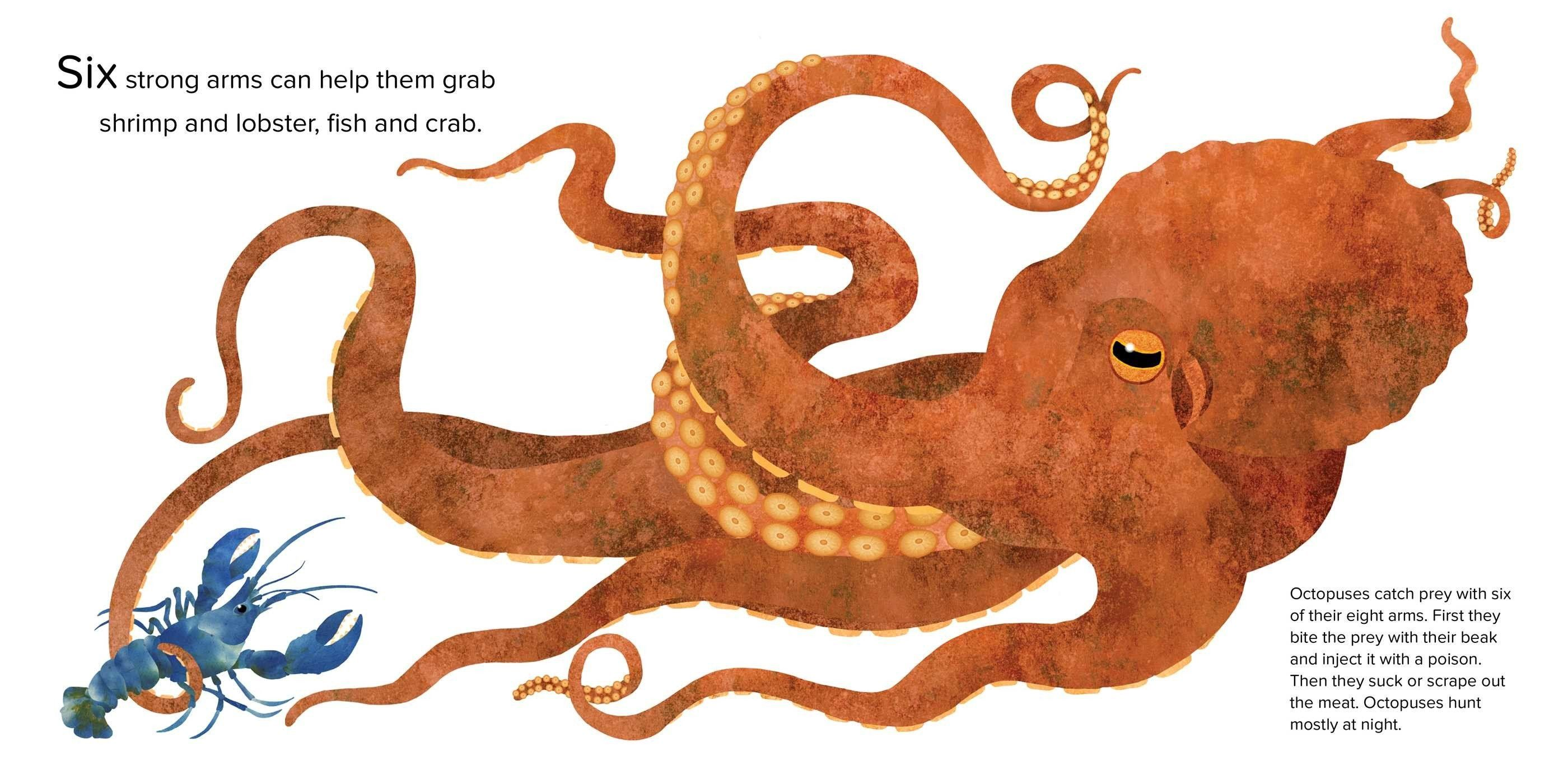 Bonbon reccomend Octopus erotic fiction
