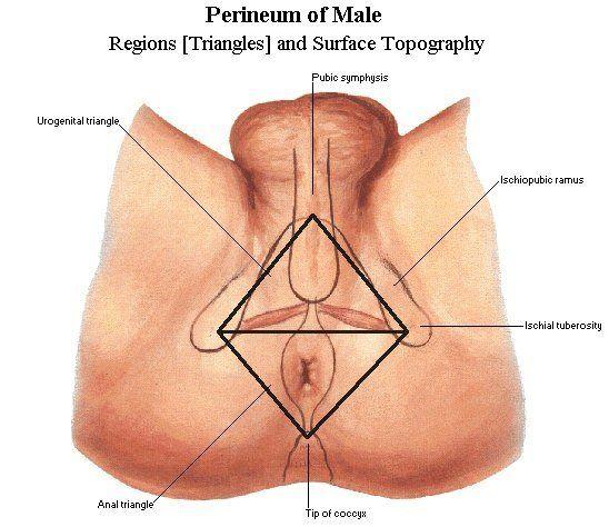 testicle in putting anus Male