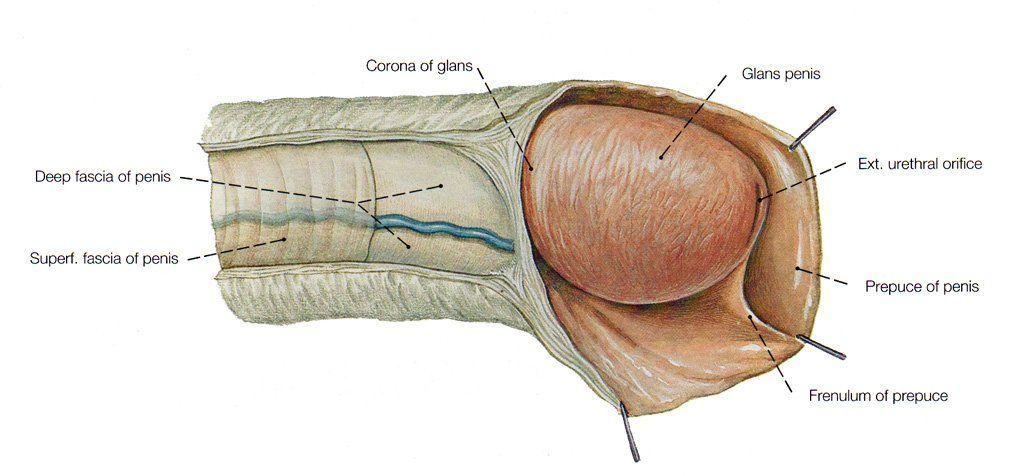 Bangbros castro interracial tube