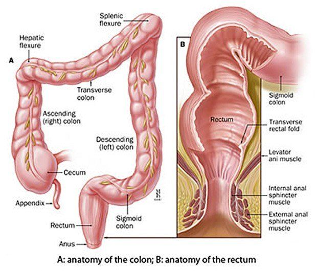 Tip through anal intestine that interrupt