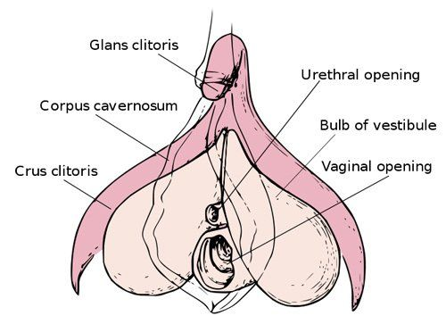 Clitoris is painful and swollen